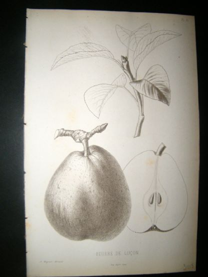 Pomologie de La France C1865 Fruit Print. Beurre de lucon, Pear 15 | Albion Prints